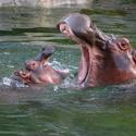 Spring Break at The Dallas Zoo