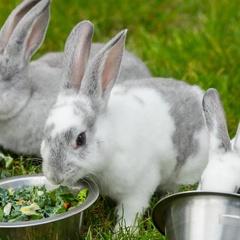 Rabbit Romp