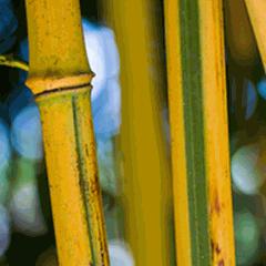 Garden tours: Plant Journeys