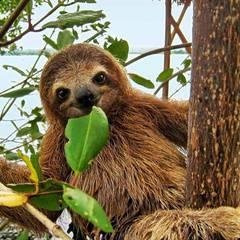 Regina - Meet a Sloth and more! Natural History Exhibition