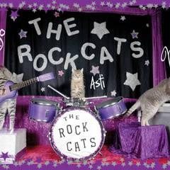 The Amazing Acro-cats Pounce on Portland!