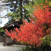 Hakone Matsuri Festival