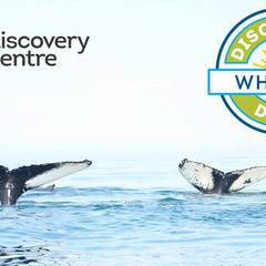 Discovery Days: Whales