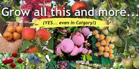 Design and Plant Your Edible Forest Garden Calgary