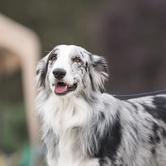 Biggest Dog Meet-up Vancouver