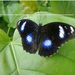 Annual Biology Butterfly Show