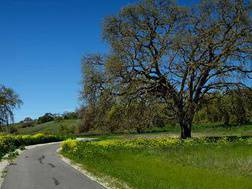 Santa Clara County Parks & Recreation