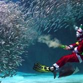 Santa at Seattle Aquarium