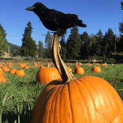 InishOge Organic Farm Pumpkin Patch