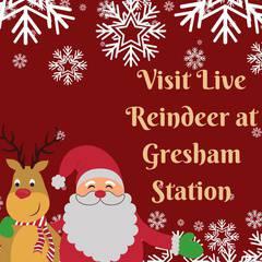 Meet Santa's Live Reindeer!