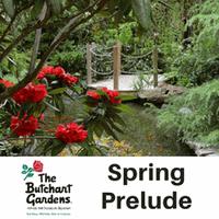 Spring Prelude Indoor Garden