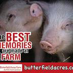 Butterfield Acres Farm
