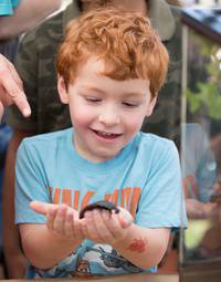 Bug Day - A Family Festival of Insect-inspired Fun!