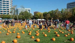 Pumpkins in the Park