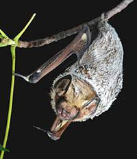 Toronto Zoo Celebrates Ontario Bats!