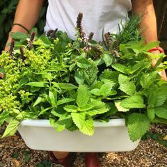 DIY Herbal Teas