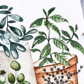 Watercolor Botanicals Class: TheMintGardener at Shop JOIN
