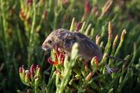 NATURE DETECTIVES: Marsh Mammal Madness