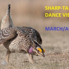Sharp-tailed Grouse Dance Trip Information Meeting