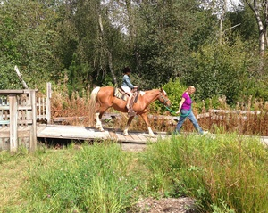 Blueberry Sale and Pony Rides at the Richmond Nature Park