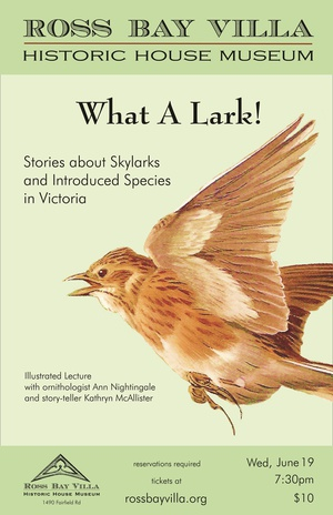 What a Lark!: Stories of Skylarks and Introduced Species in Victoria