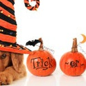 "A Winery Halloween: Dog ""Tricks & Treats"""