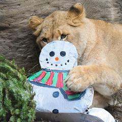 Sacramento Zoo Holiday Magic