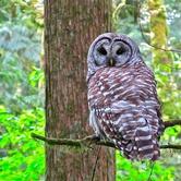 Owl Fest in SW PDX