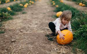 Top 5 Corn Mazes and Pumpkin Patches in Edmonton