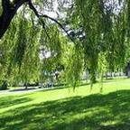 Hastings Community Park