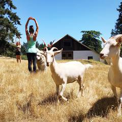 Bring your Kids to Farm Animal Yoga