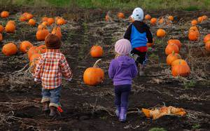 October Guide: Major Events & Fall Things To Do in Greater Victoria