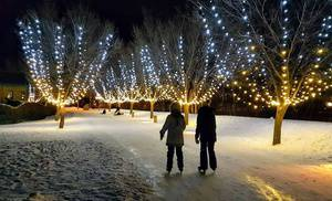 Ice Skating in the Enchanted Lights Forest