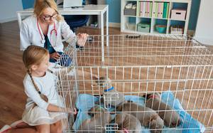 Family Pups: What to Look for in a Puppy Before Adopting