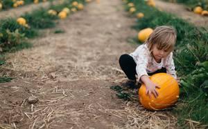 The 8 Best Corn Mazes & Pumpkin Patches in Portland
