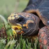 Sask Reptile Rescue Facility Fundraiser