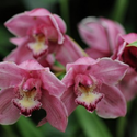 Sale of Orchids and Companion Plants