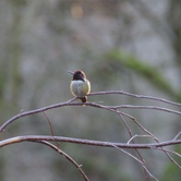 March Bird Walk