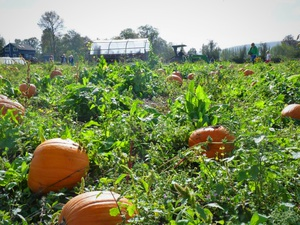 Jubilee Farm Harvest Festival