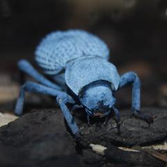 Seattle Bug Safari