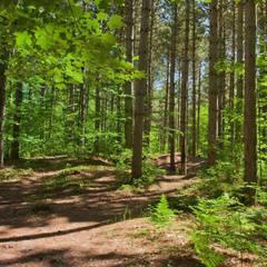 Pinhey Forest