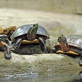 Turtle Tots Parent & Tot Program