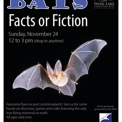 Bats Facts or Fiction