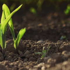 Soil Summit Management & Sustainability