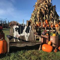Thomasson Family Farm October Pumpkin Patch