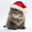 Craig Street Cats Holiday Shopping Event