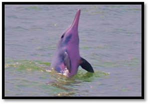 Marine Mammal Research in Malaysia & Vietnam with Ellen Hines
