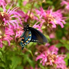 Native Texas Butterfly House & Garden