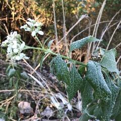 Plant Hike
