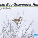 Eco-Scavenger Hunt: Winter Twigs and Buds